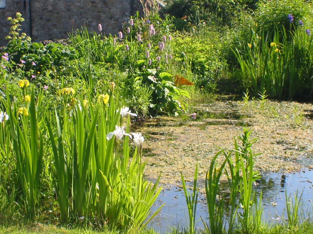 Huddlestone cottage and the hayloft self catering holiday for Plants around ponds